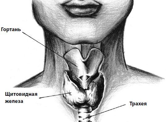 Устройство щитовидной железы