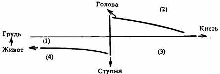 Двенадцать меридианов, связанных с твердыми и полыми органами