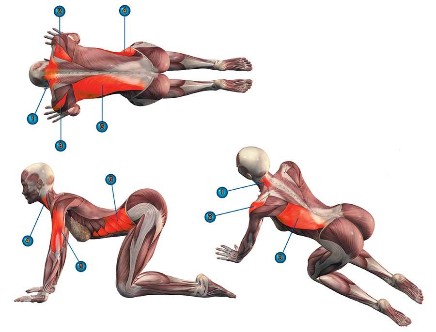 менее она йога с картинками какие мышцы дробны тянуть британец или голландец