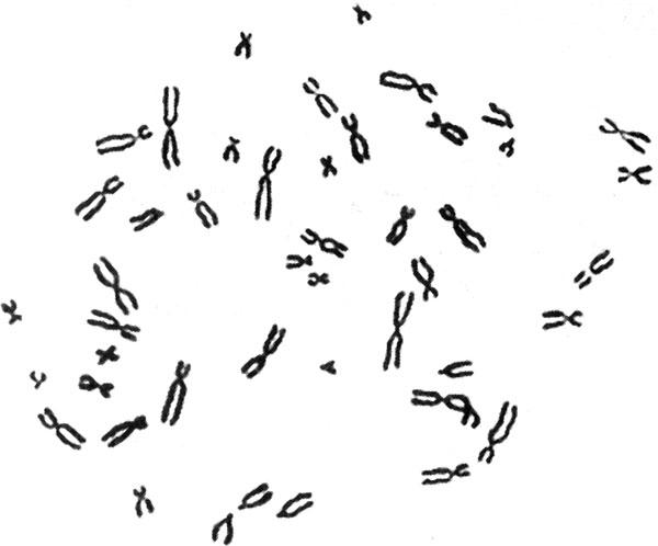 3.2. Генетический материал эукариот