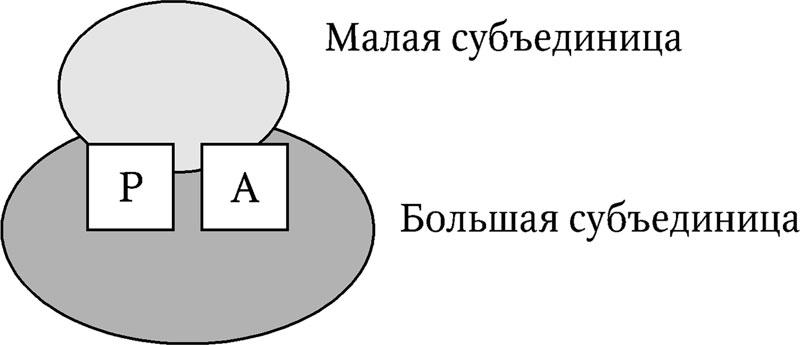 6.4. Трансляция