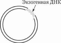 7.3. Введение рекомбинантной ДНК в клетку