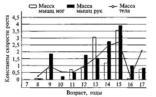 Динамика роста скелетных мышц