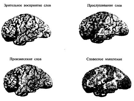 Методики изучения функциональной организации мозга