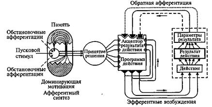 Принцип системной организации интегративной деятельности мозга
