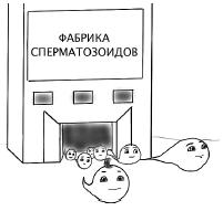 Фабрика для сперматозоидов