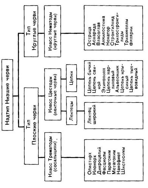 Глава 4. Класс трематоды (Trematoda)