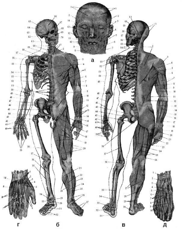 Гимнастика (ЛФК) для укрепления мышц спины видео
