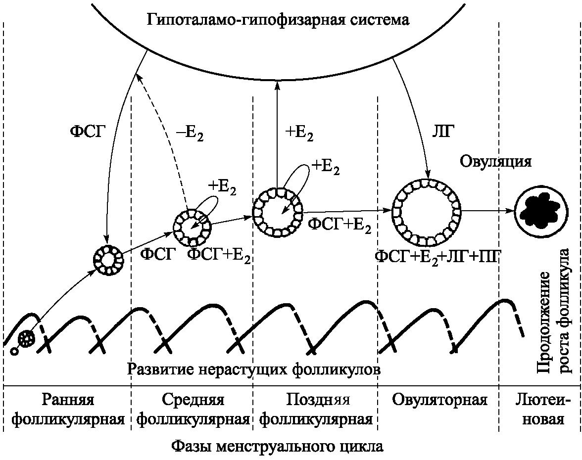 Нейрогуморальная регуляция репродуктивной системы