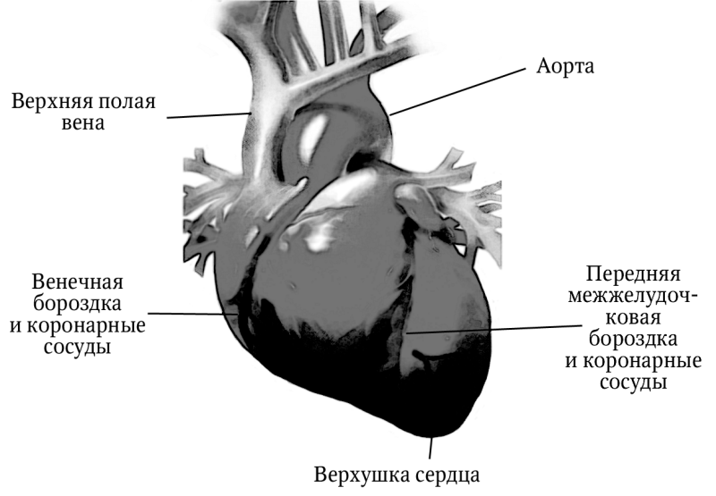 инфаркт миокарда методические пособия