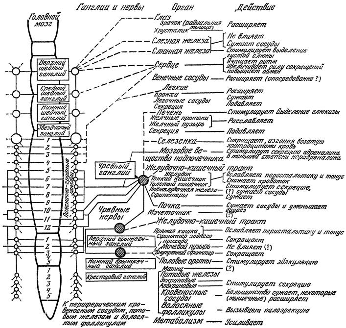 Глава III. Гуморально-гормональная регуляция физиологических процессов