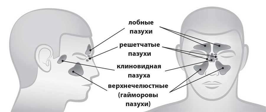 Глава 1 Как устроен нос