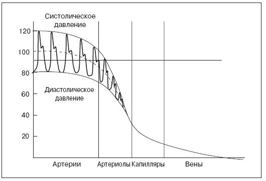 Рис. 20. Изменение кровяного давления в разных частях сосудистого русла