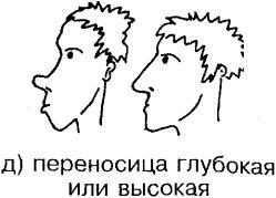 Ноздри носа могут быть: