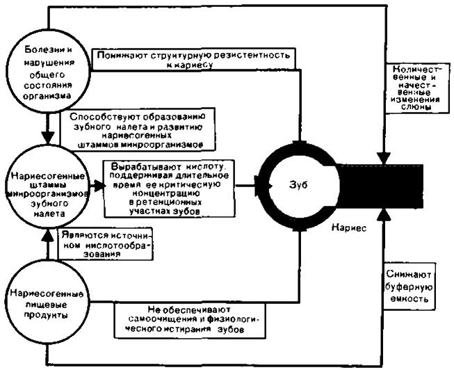 Симптомы кариеса - причины, стадии, теория развития кариеса