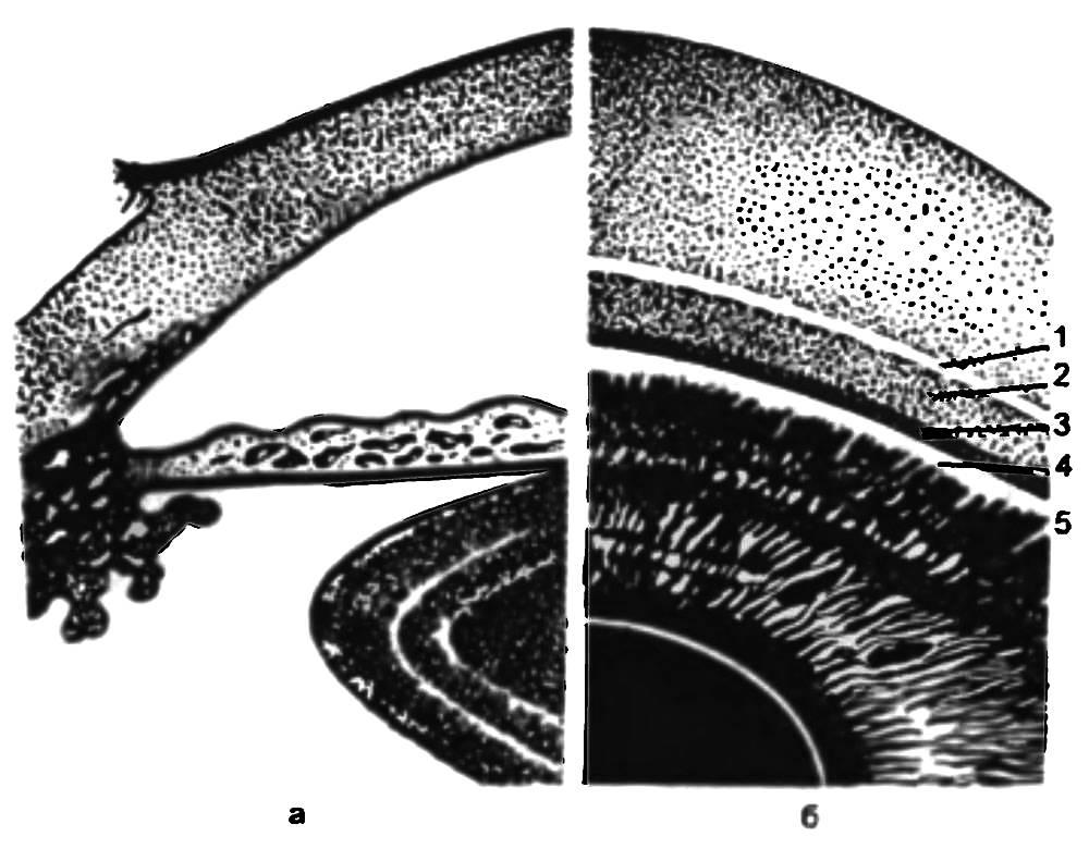 Дренажная система глаза