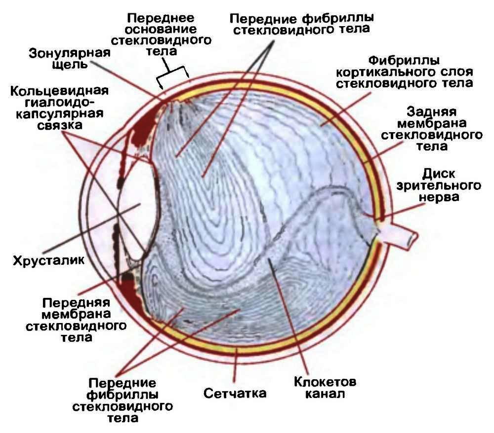 Внутреннее ядро (полость) глаза